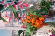 Farbenfrohe Blumenpracht