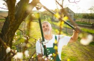 Gartenpflege von Abelein Dienstleistungen in Renchen