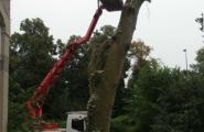 Stückweise Baumfällung mithilfe eines Krans