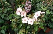 Frische Pflanzen für Ihren Traumgarten