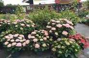 Unser Team besteht aus Gärtnern, Floristen und Baumschülern
