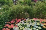 Garten Center Klintworth - Eine Oase für Pflanzenfreunde