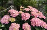 Wunderschöne Balkon- und Zimmerpflanzen zu guten Preisen