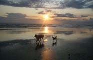 Tiere am Strand bei Sonnenuntergang