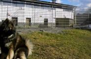 Hundeschule und Hundepension Hand & Pfote in Halver