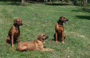 Drei Hunde in der Hundeschule