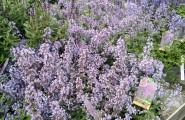 Für Pflanzenfreunde aller Art ist das Garten Center Klintworth aus Hamburg die ideale Anlaufstelle