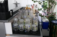 Cocktaigläser von Tropische Events mit CLIVE cocktails in Neu-Ulm
