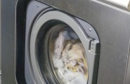 Waschmaschine WM5073 von der Wäscherei Pauer in Hamburg