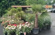 Verschiedene Outdoor Pflanzen