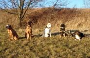 Sechs Hunde beim Training