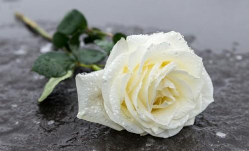 Firmenprofil von: Rhein-Waal Bestattungen spendet im Trauerfall Trost - der Bestatter in Ratingen